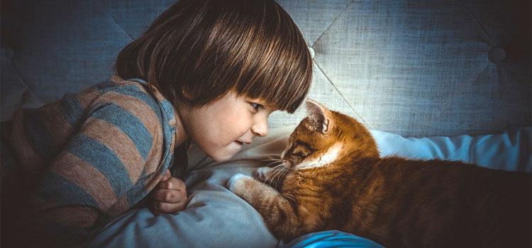 cat-1045180_960_720
