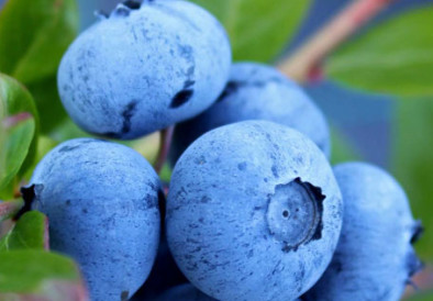 9 Superfoods To Add In Your Diet Today!