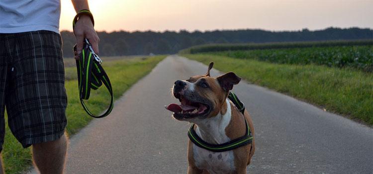 dog-1282866_960_720