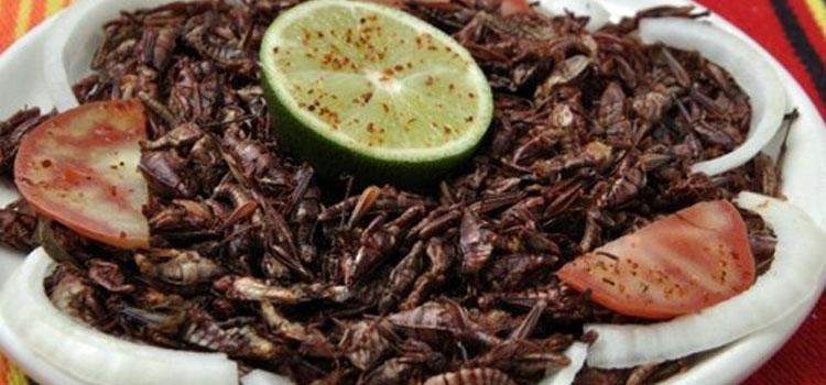 Jumiles-Stink-Bugs