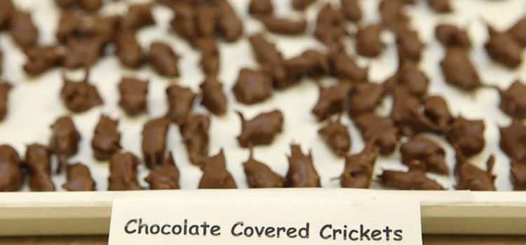 chocolate-covered-crickets-thailand