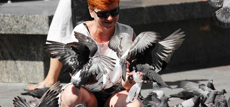 pigeons-1036863_960_720