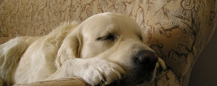 sleeping-dogs84165