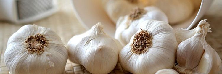 garlic4531